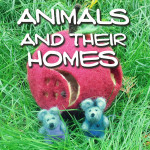ANIMALs-and-their-homes